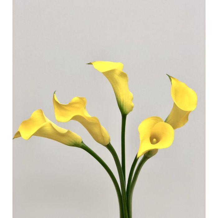 Yellow Mini Calla Lilies