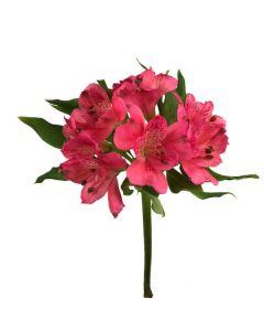 Dark Pink Alstroemeria