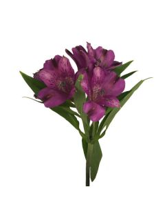 Dark Purple Alstroemeria