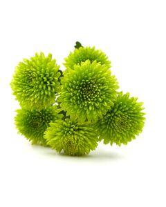 Green Button Pom