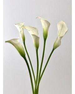 White Mini Calla Lillies