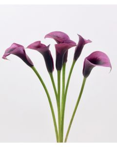 Dark Purple Mini Calla Lilies