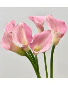 Pink Mini Calla Lilies