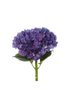 Jumbo Purple Hydrangea