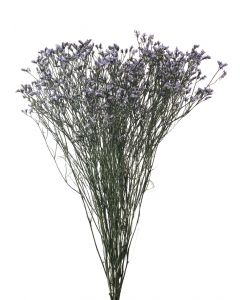 Purple Limonium
