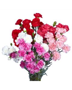 Assorted Color Mini Carnations