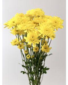 Yellow Cushion Pom