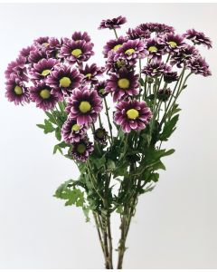 Purple Daisy Pom
