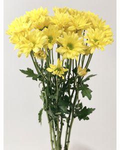 Yellow Daisy Pom
