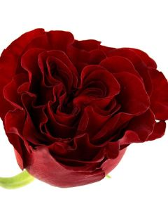 Red Long Stem Heart Rose