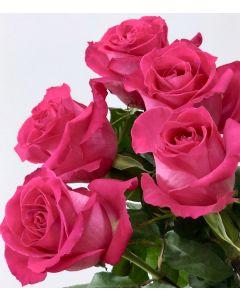 Hot Pink Standard Topaz Rose