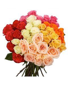 Assorted Color Long Stem Rose