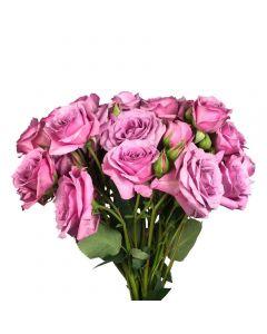 Lavender Spray Rose