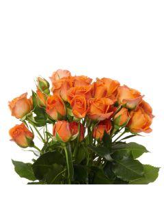 Orange Spray Rose