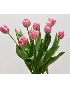 Dark Pink Tulips